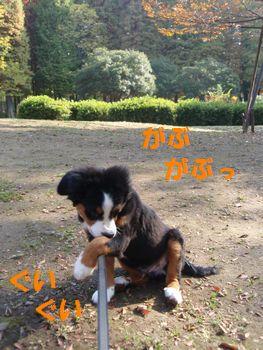 2008_1118_094113-PB180152.jpg