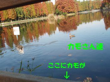 2008_1118_100121-PB180168.jpg