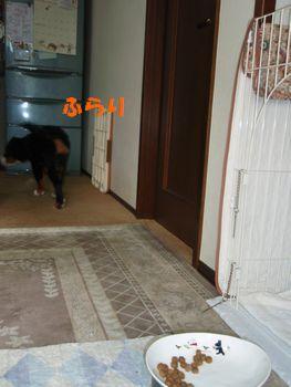 2008_1124_082423-PB240169.jpg