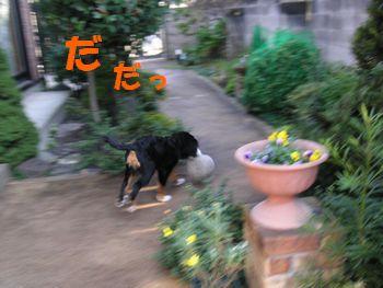 2008_1126_112847-PICT0003.jpg