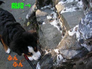 2008_1130_095135-PICT0021.jpg