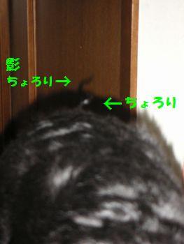 2008_1203_183844-PICT0009.jpg