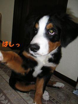 2008_1203_184006-PICT0016.jpg