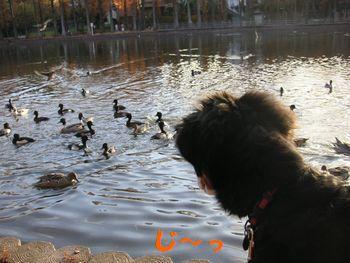 2008_1208_074926-PICT0058.jpg