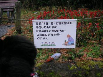2008_1209_072523-PICT0014.jpg