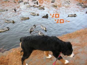 2008_1211_075219-PICT0060.jpg