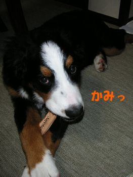 2008_1211_231445-PICT0030.jpg