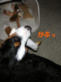 2008_1214_181732-PICT0003.jpg