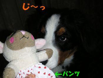 2008_1214_183148-PICT0022.jpg