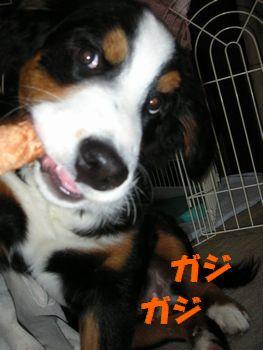 2008_1217_070424-PICT0008.jpg