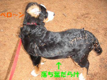 2008_1217_075616-PICT0024.jpg