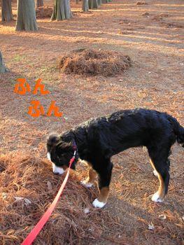 2008_1219_074154-PICT0045.jpg