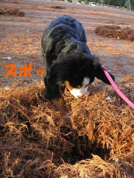 2008_1219_074207-PICT0049.jpg