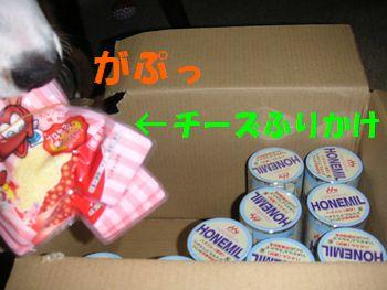 2008_1219_205943-PICT0014.jpg