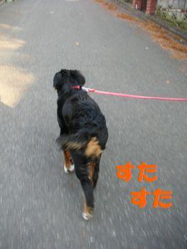 2008_1221_144623-PICT0074.jpg