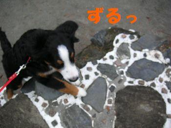 2008_1224_090514-PICT0036.jpg