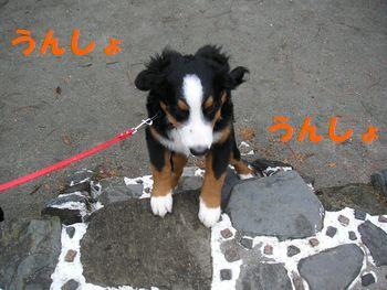 2008_1224_090517-PICT0037.jpg