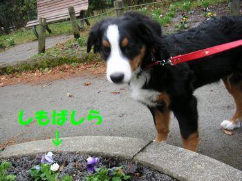 2008_1224_090608-PICT0041.jpg