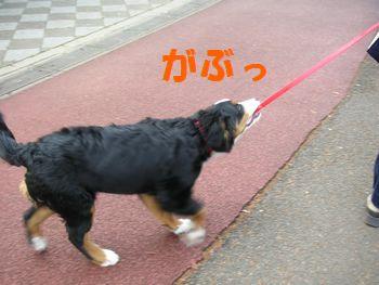 2008_1224_092303-PICT0076.jpg