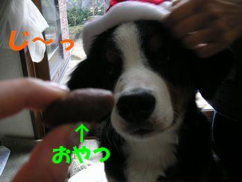 2008_1224_093816-PICT0106.jpg
