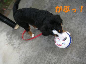 2008_1225_074334-PICT0025.jpg