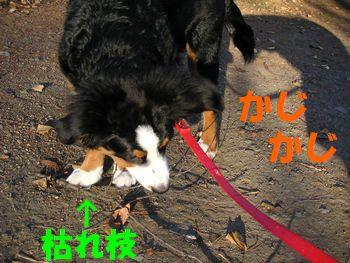 2008_1227_080111-PICT0004.jpg