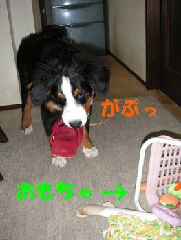 2008_1227_202857-PICT0023.jpg