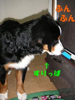 2008_1227_203302-PICT0037.jpg