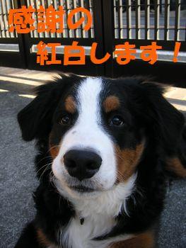 2008_1231_091709-PICT0020.jpg