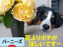 本当は花よりだんごなREXにポチありがとうございます~!とっても嬉しいです!