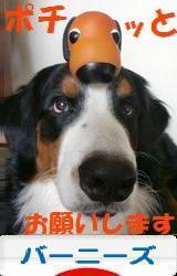 ポチありがとうございます!REXと犬さん、大喜びで~す