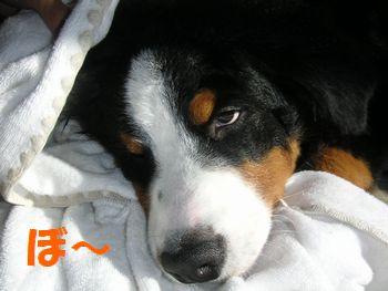 2009_0103_120008-PICT0089.jpg
