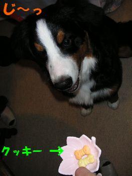 2009_0104_171313-PICT0039.jpg