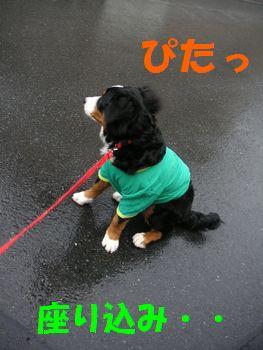 2009_0109_080417-PICT0073.jpg