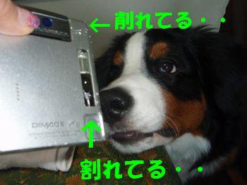 2009_01113_075049-P1130007.jpg