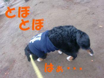 2009_0314_080803-CIMG2712.jpg