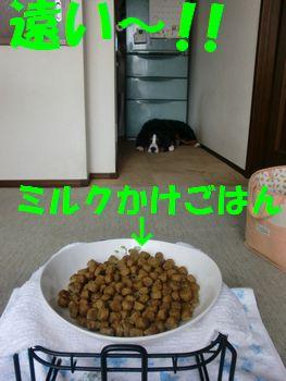 2009_0317_085950-CIMG2926.jpg