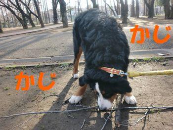 2009_0323_073204-CIMG3482.jpg
