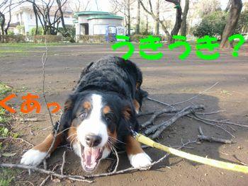 2009_0323_073242-CIMG3485.jpg