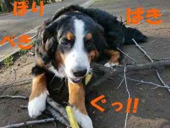 2009_0323_073350-CIMG3492.jpg