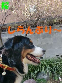 2009_0323_075102-CIMG3501.jpg