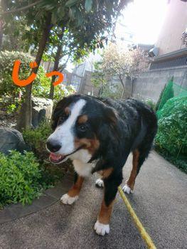 2009_0323_075146-CIMG3506.jpg