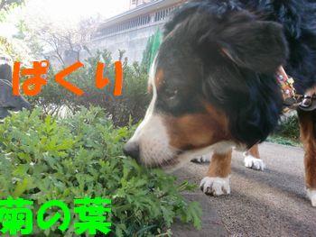 2009_0323_075210-CIMG3510.jpg