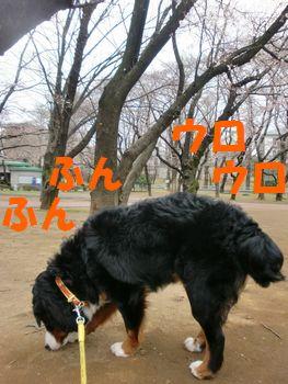 2009_0324_073956-CIMG3535.jpg