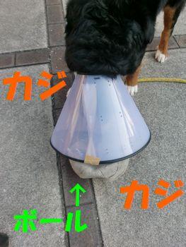 2009_0327_064314-CIMG3759.jpg
