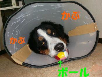 2009_0328_203202-CIMG3837.jpg