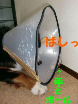 2009_0328_203418-CIMG3853.jpg