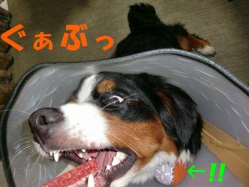 2009_0329_205404-CIMG3909.jpg