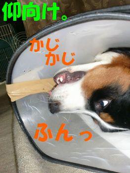 2009_0329_210518-CIMG3942.jpg