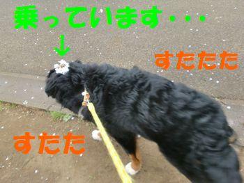 2009_0401_082718-CIMG4094.jpg
